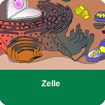 Grundlagen 1 - Zelle