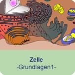 Zelle (Grundlagen 1)